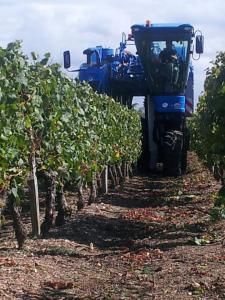 Machine Harvesting of Grapes