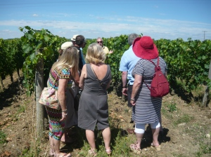 Talking about the Grape Varieties on one of our Loire Valley Wine Tours