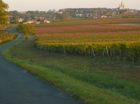 Vineyards in le Puy Notre Dame in Autumn.