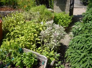 Herbs at our Gites