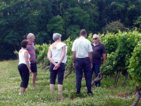 A Loire Valley Vineyard