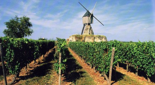 vineyard-Montoreau